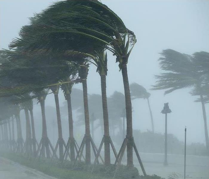 Outdoor with high winds blowing palm trees in a severe storm.